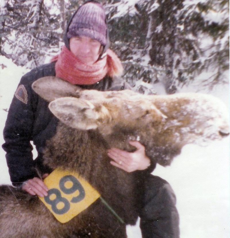 Moose_bander.jpg